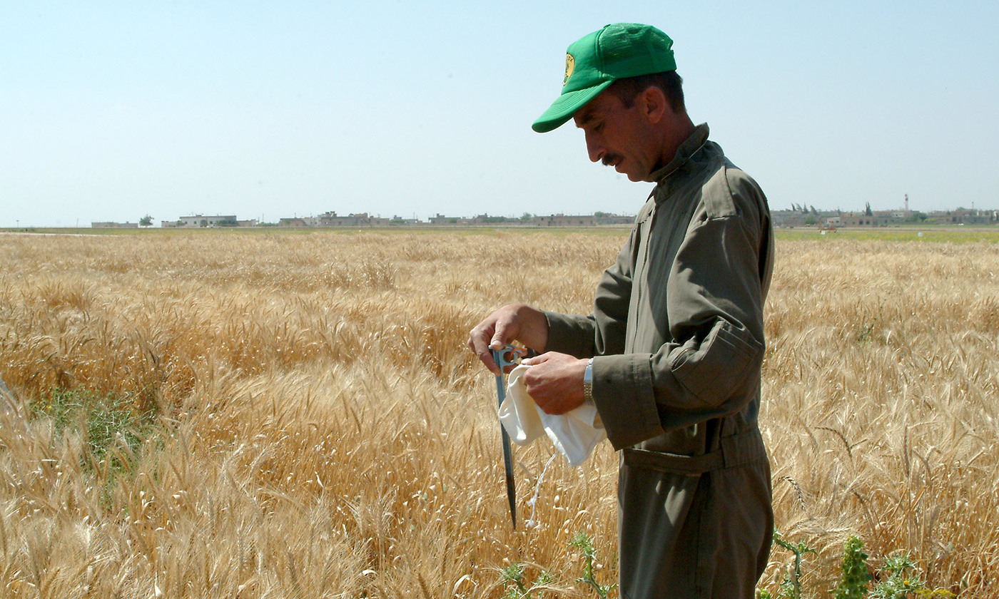 <p><em>Photo courtesy  ICARDA-Science for Better Livelihoods in Dry Areas</em></p>