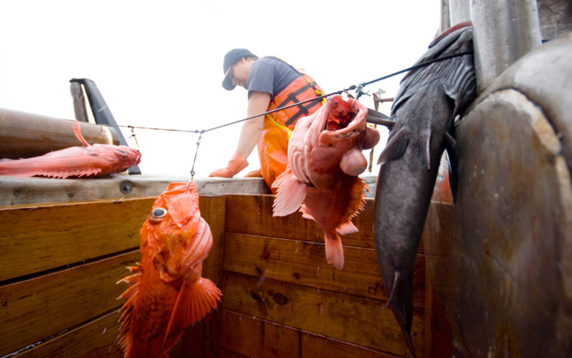 oceanic fishery essay Overfishing - a global environmental problem, threat to our oceans and disaster overfishingorg provides consumer information on fisheries, overfishing and good fish guides.