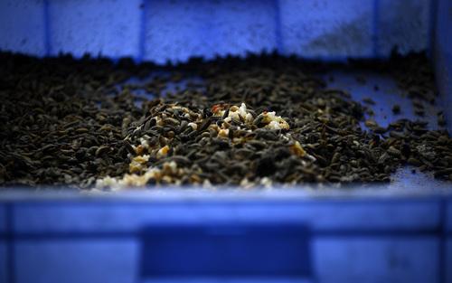 Don't farm bugs | Aeon