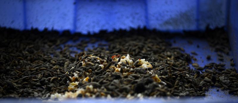 Don't farm bugs   Aeon Essays