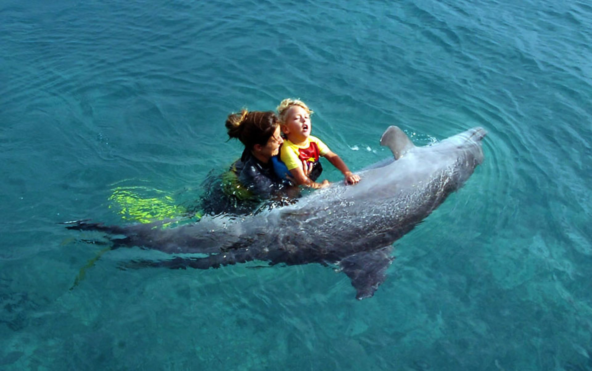 dolphin therapy doesn u2019t work  u2013 for the child or the animal