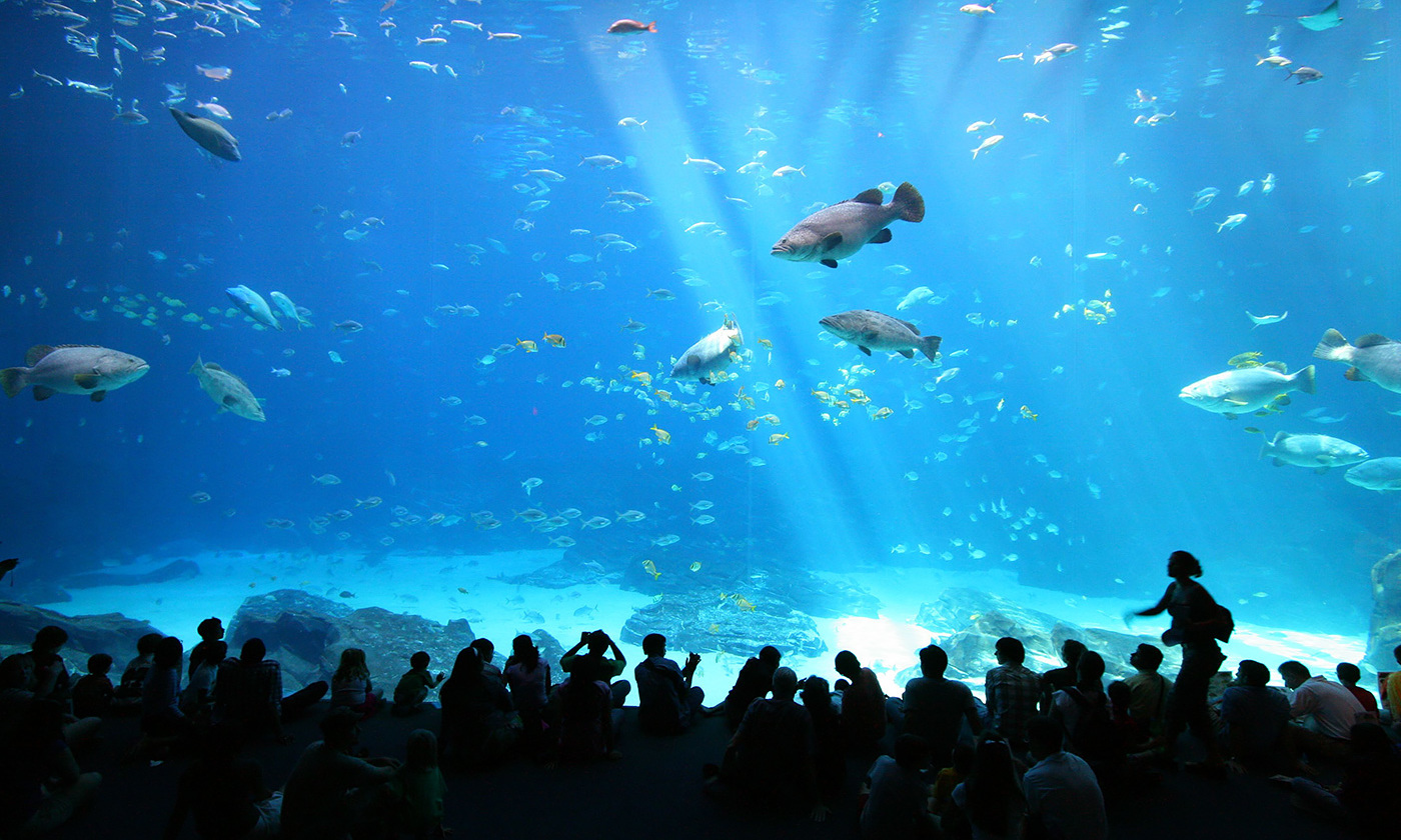 Taking children to an aquarium is a lesson in cruelty