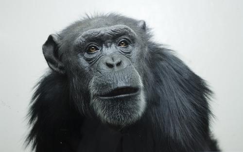 The pointing ape | Aeon