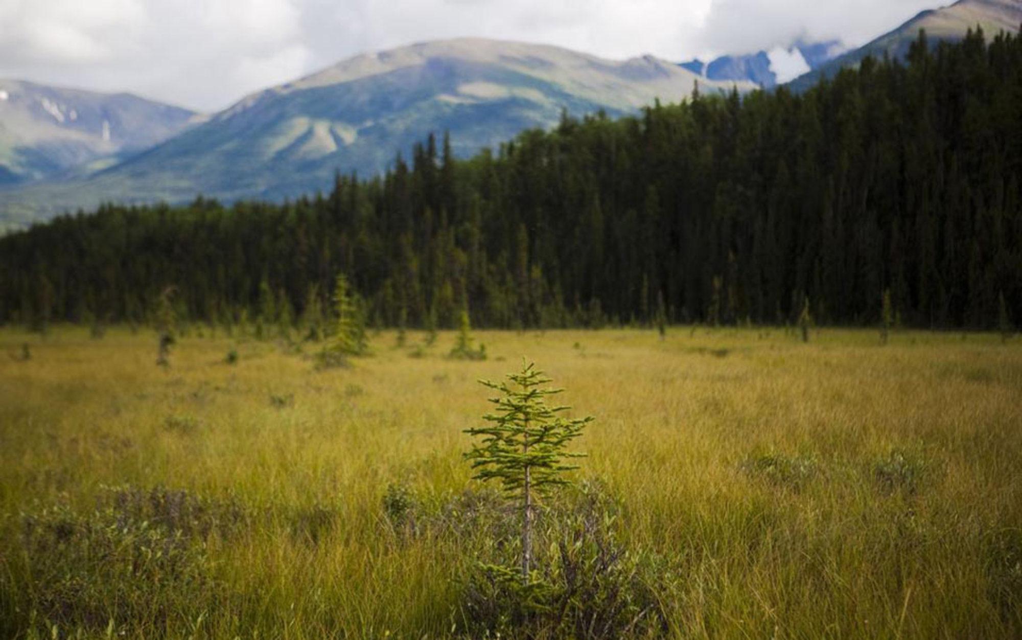 Header meadow