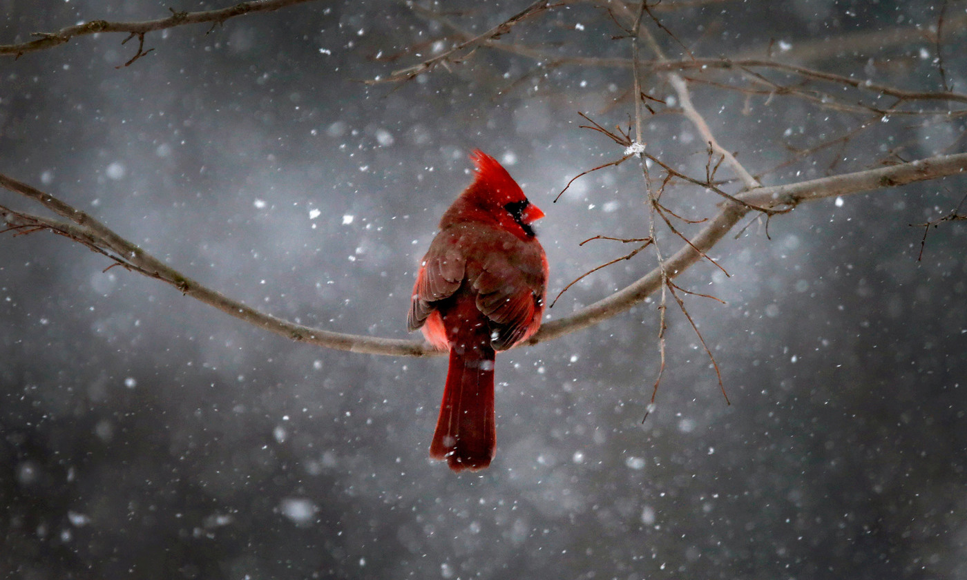 Birdland   Aeon