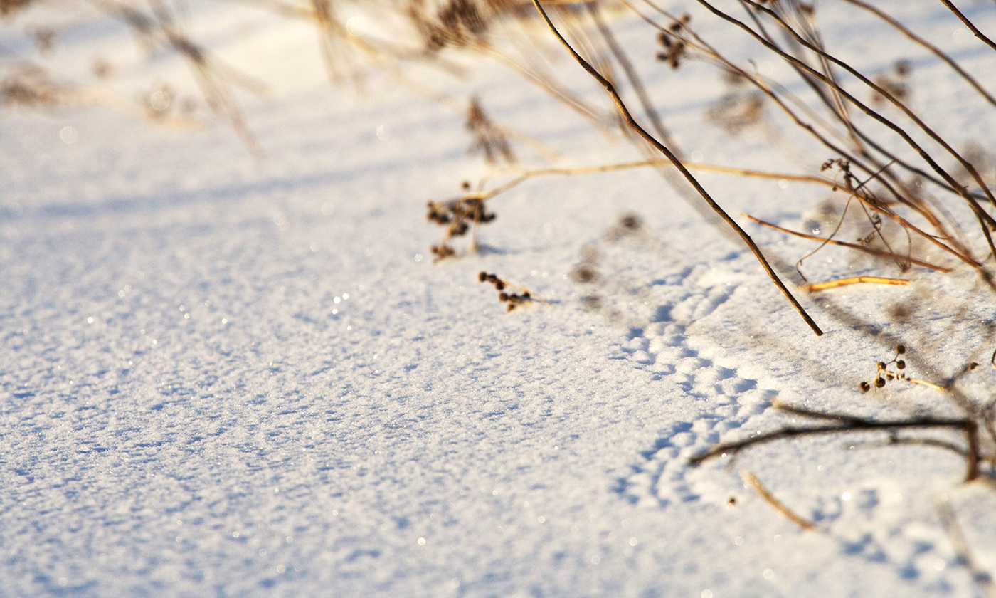 <p>Little tracks. <em>Photo Matt MacGillivray/Flickr</em></p>