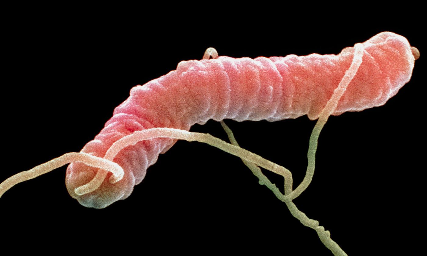 Microbes have no morals | Aeon