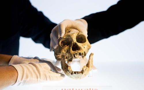 Did Homo erectus speak? | Aeon