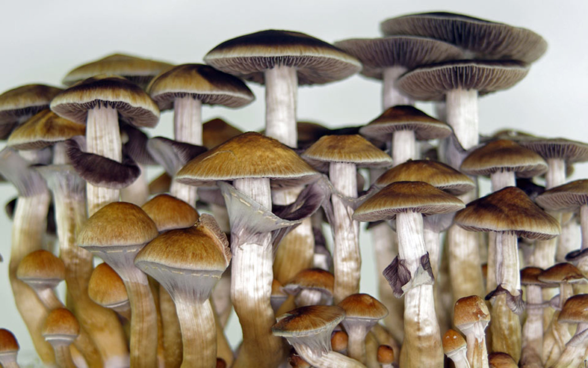 Header mushrooms