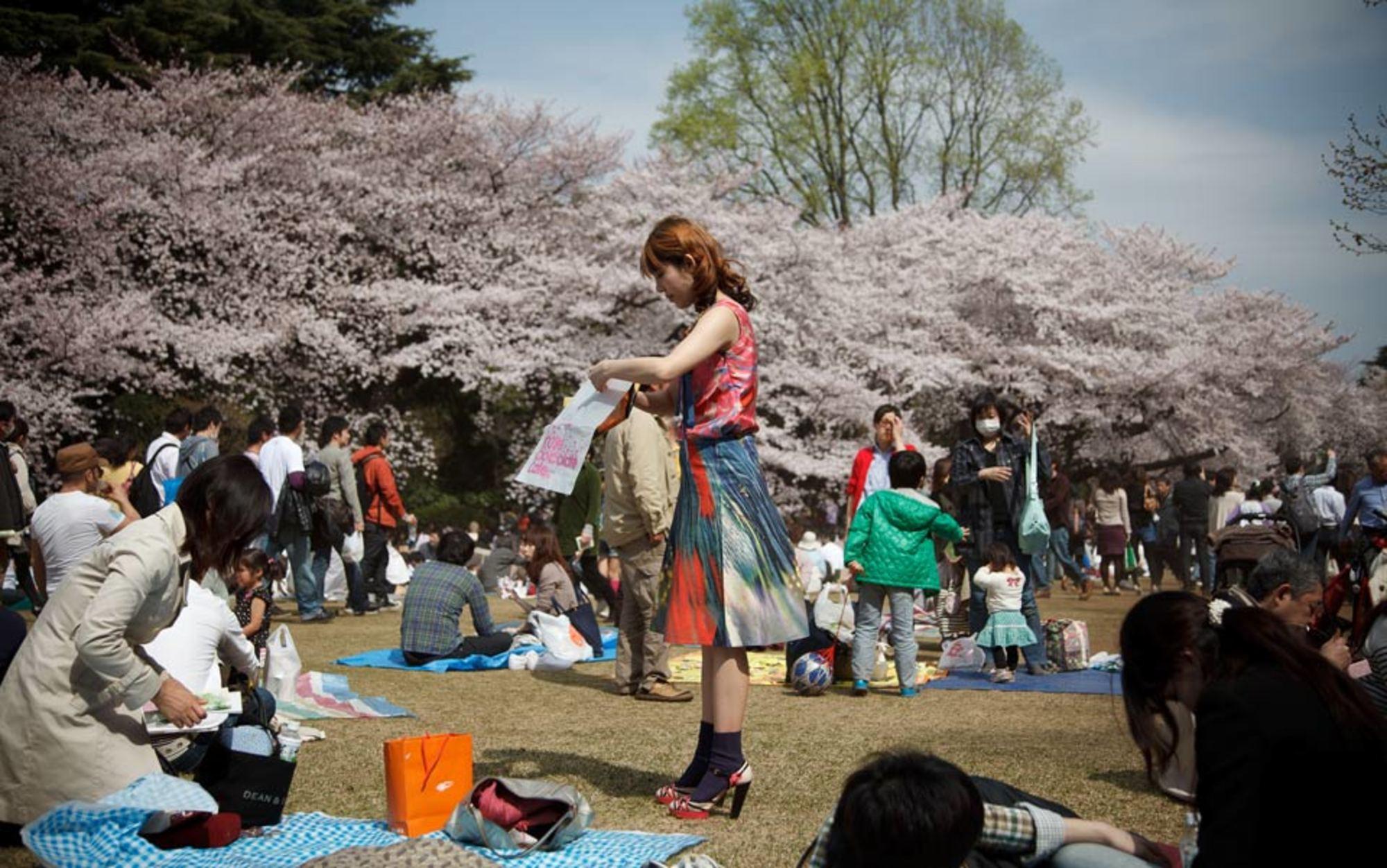 Header cherry blossom in shinjuku