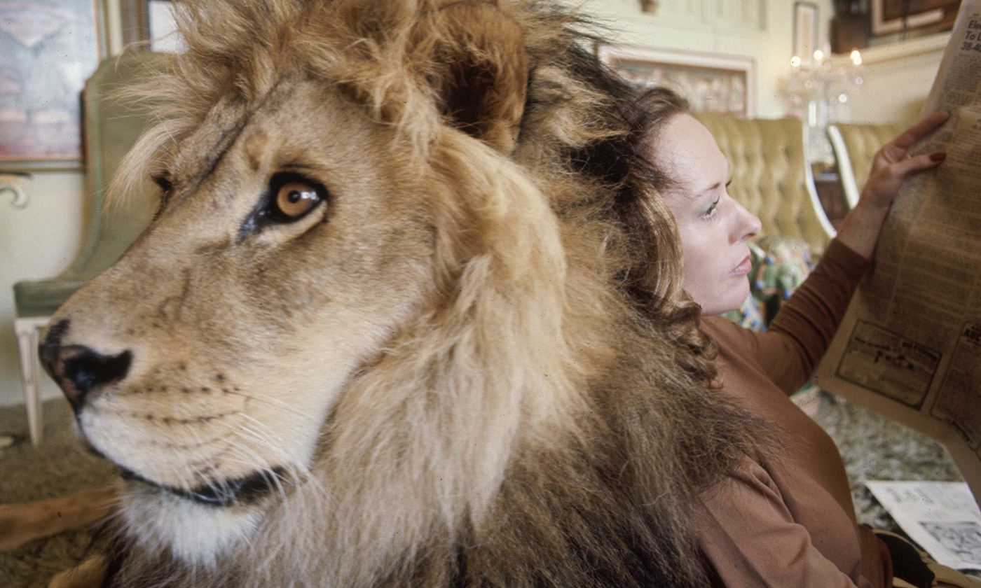 <p>Imagine a lion in the room. <em>Photo by Michael Rougier/Time Life/Getty</em></p>
