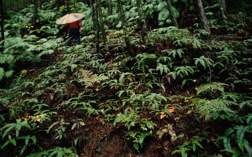 The healing power of nature | Aeon