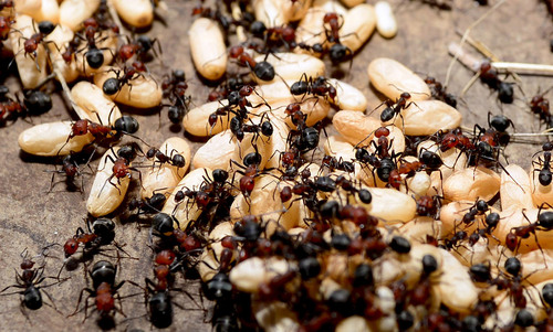 An ant colony has memories that its individual members don't have | Aeon