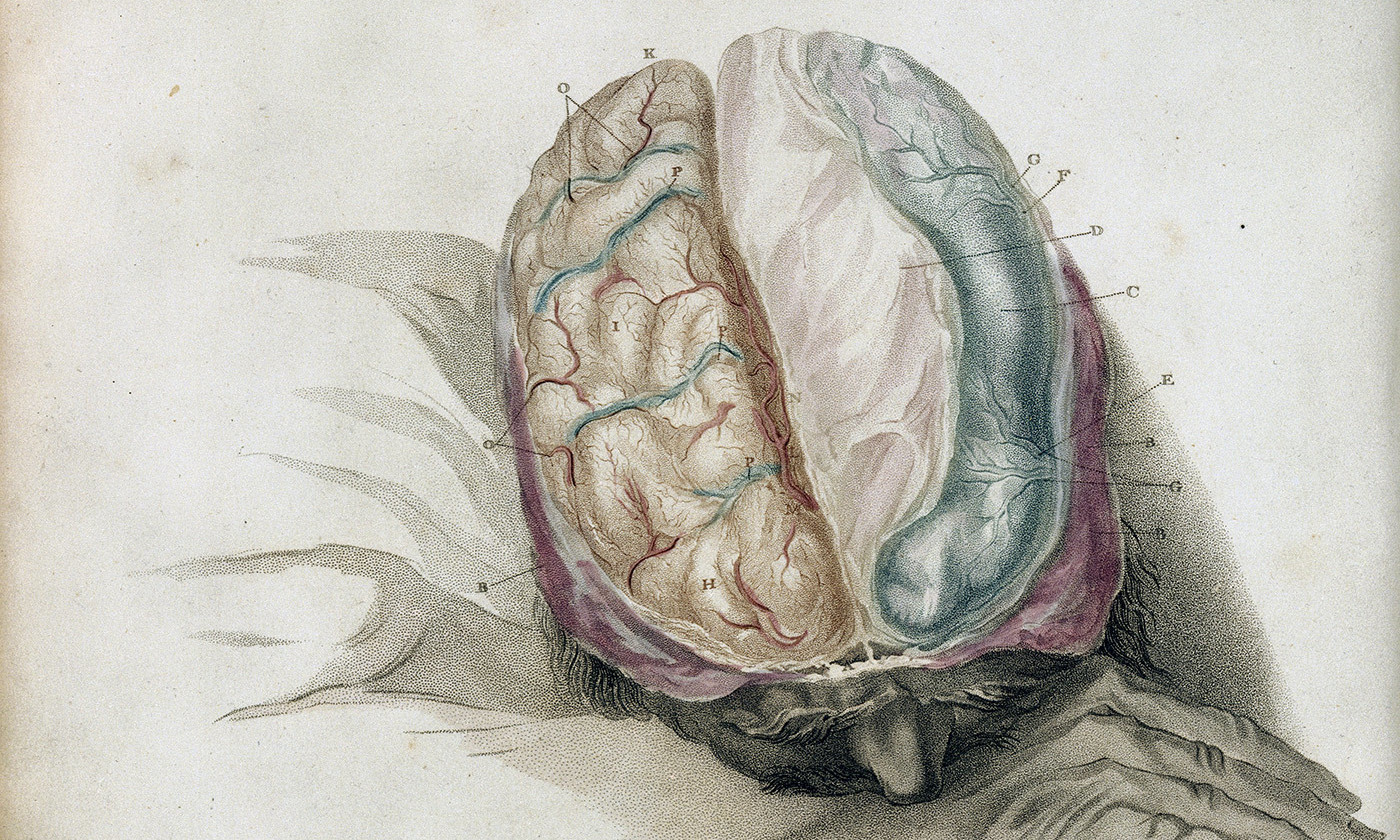 Charles Bell <em>The Anatomy of the Brain</em>. Courtesy Wellcome Images