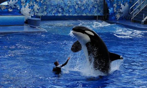 Stop boycotting SeaWorld if you care about marine conservation | Aeon