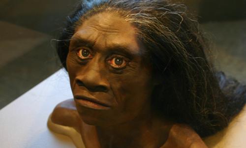 Investigating Homo floresiensis and the myth of the ebu gogo | Aeon