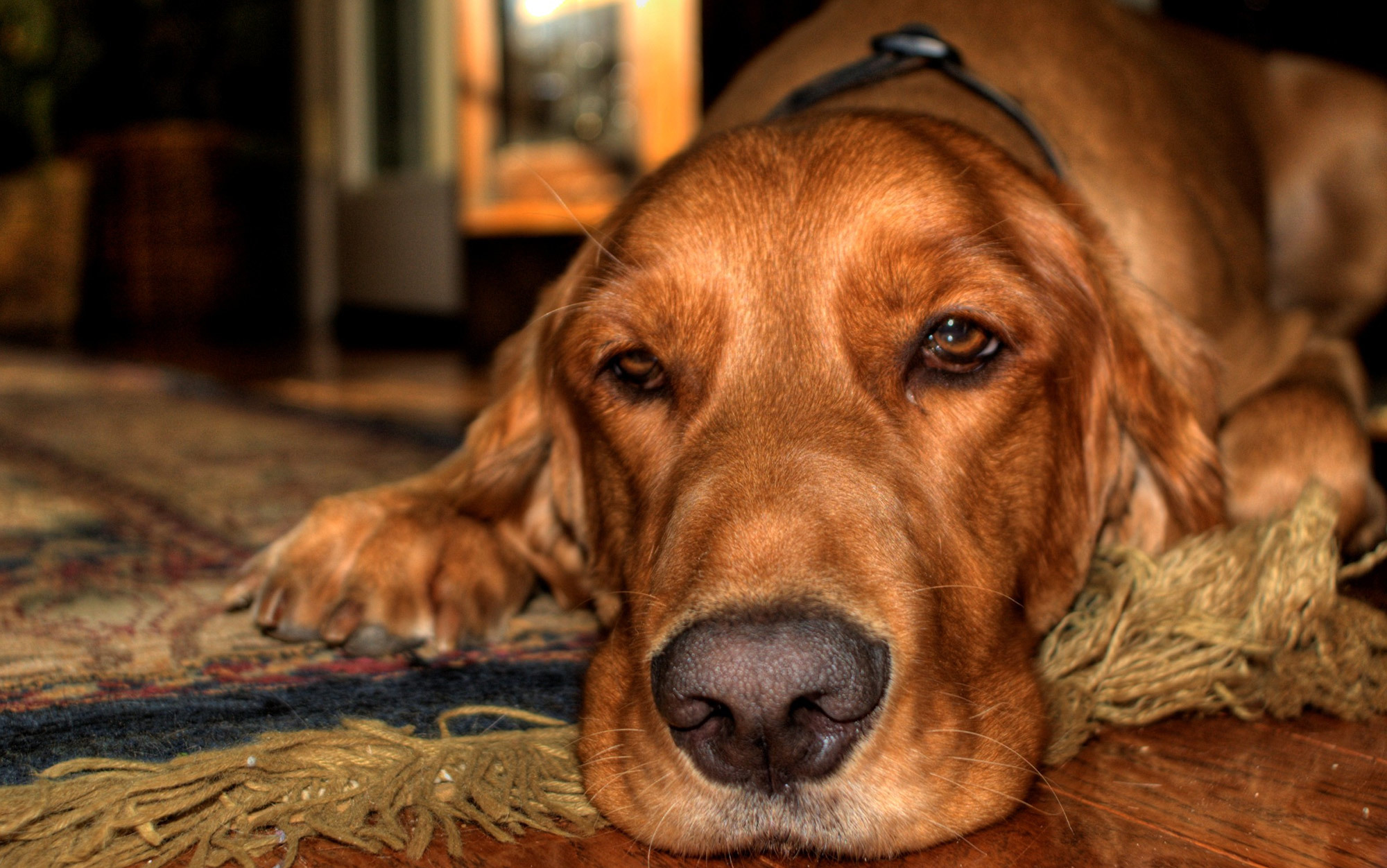why keeping a pet is fundamentally unethical
