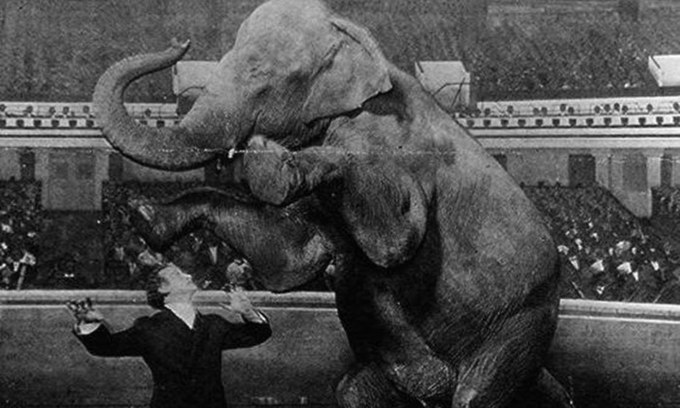 <p>Now you see it... Magician Harry Houdini moments before 'disappearing' Jennie the 10,000lb elephant at the Hippodrome, New York, in 1918. <em>Photo courtesy Library of Congress</em></p>